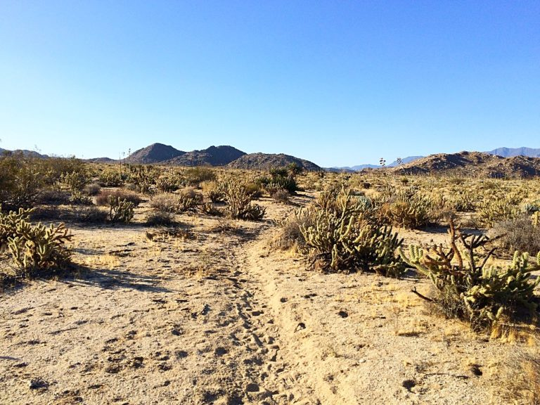 Running on the California Riding and Hiking Trail. Watch out for the cholla cactus!